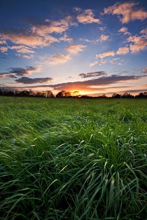 Sunset over a lush field of grass