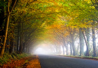 Road through misty autumn trees