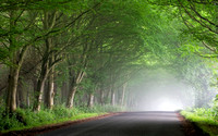 Road through misty trees