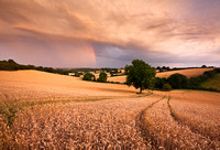 Rainbow over a wheat field at sunset
