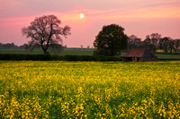 Sunset over a rape field